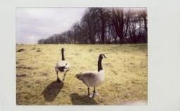 Aufruf: Zeig uns Dein Bild von Lindenthal – Fotoraum Köln
